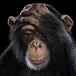 成功するための『モデリング』。『猿マネ』『スワイプ』の意味と使い方